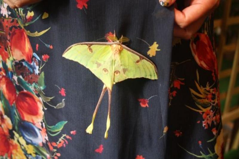 Екзотични пеперуди ще пърхат във Флората
