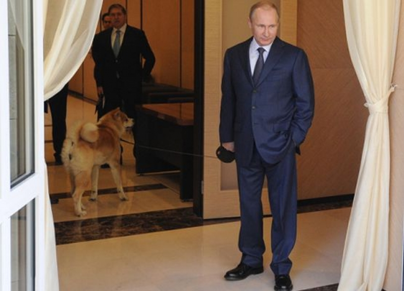 Путин ще придобие още едно акита ину