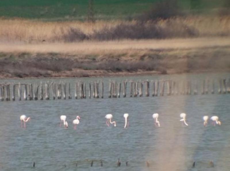 И розовото фламинго припозна Бургас като най-добро място за живеене