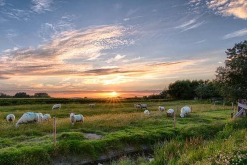 Екипи на МЗХГ са в  засегнатите от чума по овцете райони в Бургаско