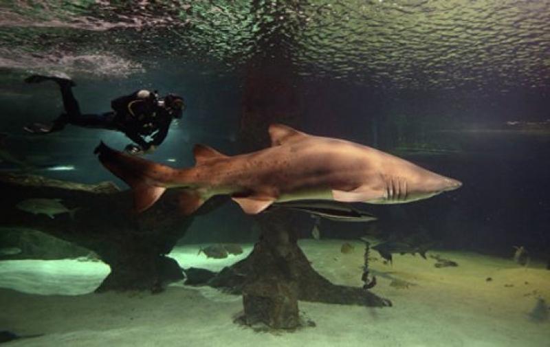 В Тексас откраднаха акула, полицията я намери