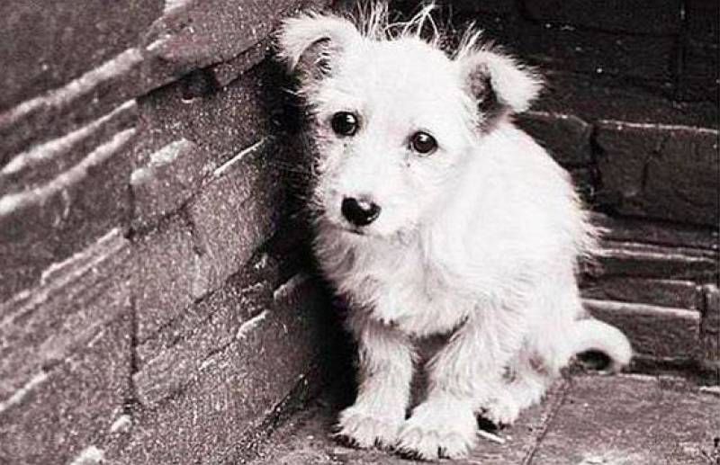 Бургас сред петте общини с най-много осиновени кучета