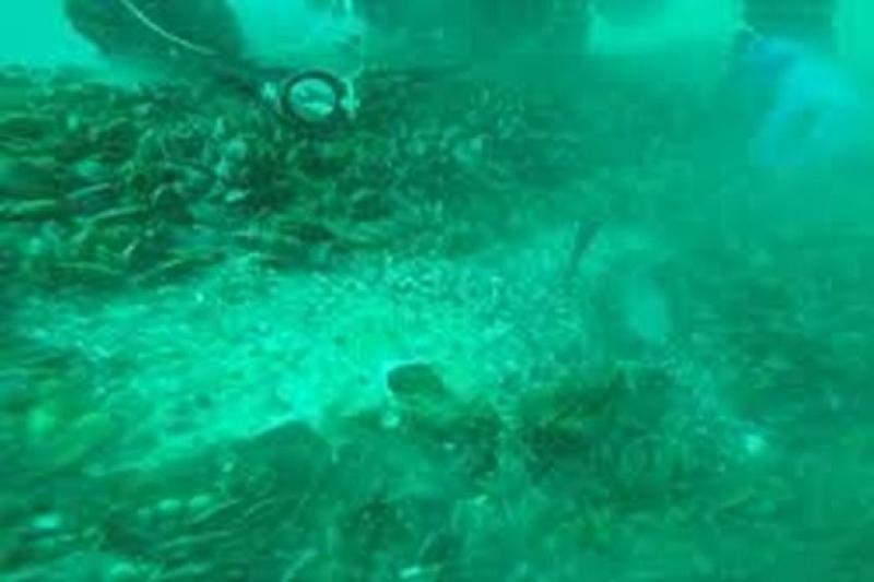 Взети са нови проби от морската вода край Созопол