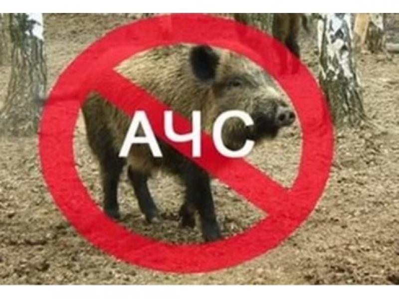 Мерки срещу проникването на африканска чума по свинете влизат в сила в област Бургас