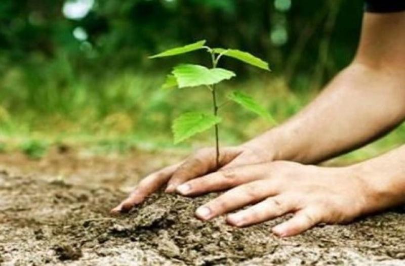 """Училища и граждани от Бургас се включват в кампанията """"Засади дърво"""""""