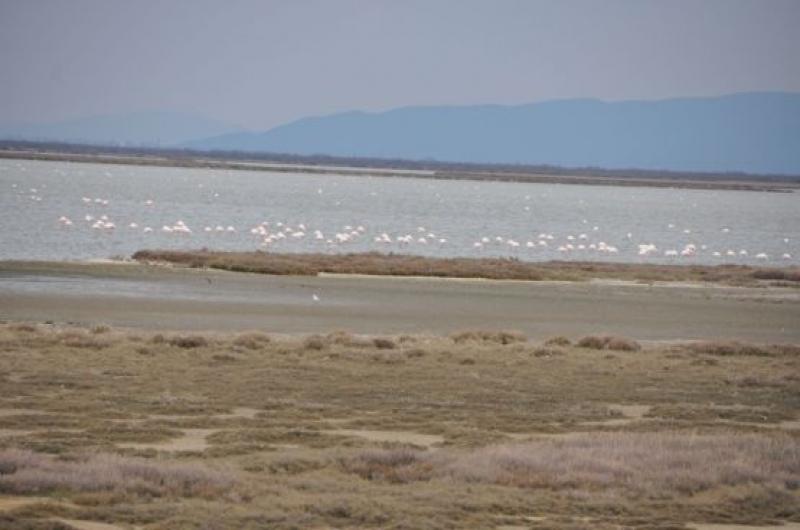 Поморийското езеро е част от международен проект за опазване на влажните зони