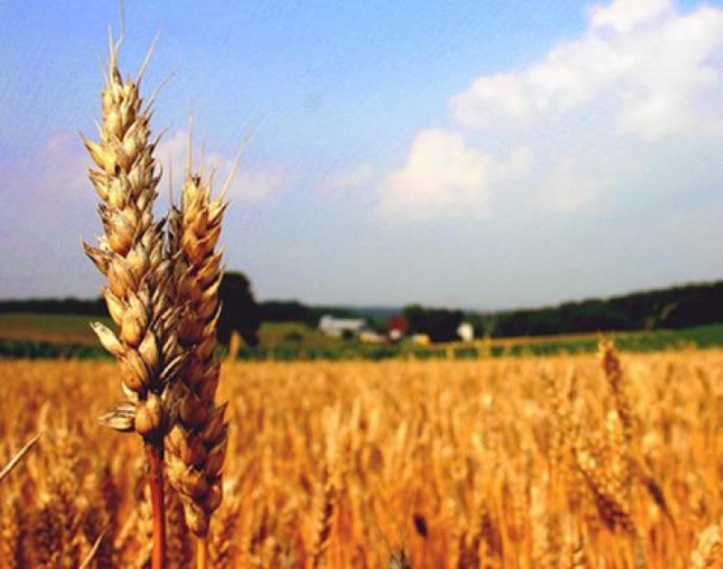 Красимир Каракачанов внесе в МС мерки в подкрепа на българските земеделци